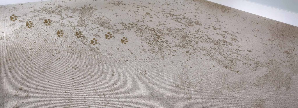 Carpet Cleaning Dirty Pet Damage